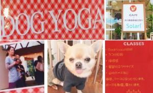 dogyoga
